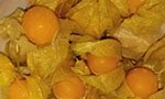 How can the bioactive physalis compound help in cancer treatment?