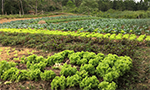 Organic agriculture brings quality of life to producers