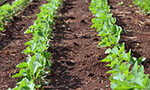 Research monitoring waste levels of the Glyphosate Herbicide