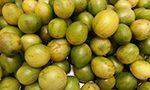 Semente e casca de umbu possuem nutrientes e compostos com potencial bioativo