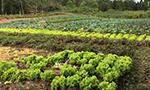 Trabalho na agricultura orgânica traz qualidade de vida aos produtores