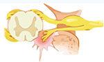 Como o uso de uma cola biológica pode permitir a recuperação de movimentos após lesão medular?